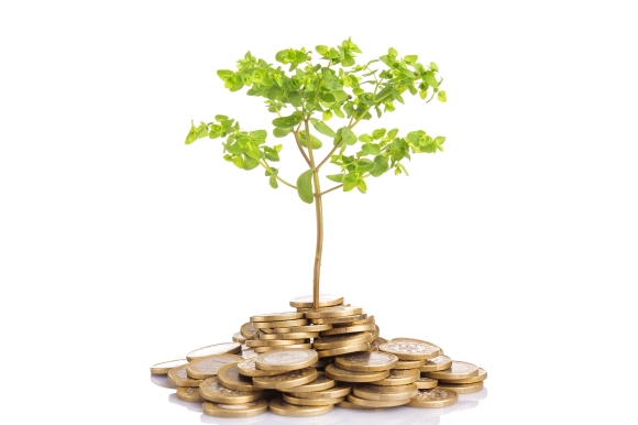 Money growing concept, isolated on white background